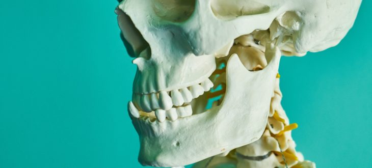 anatomy-biology-bones-2672630